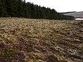 Edge of Rhyd y Felin forest - geograph.org.uk - 1758541.jpg