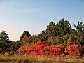 Eh l'Autunno...Carso colorato - panoramio.jpg