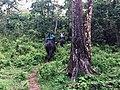 Elephant safari at Jaldapara.jpg