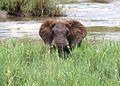 Elephant visit.jpg