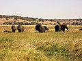 Elephants in Chobe National Park.jpg