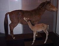 Emscherbruch Wildpferd.jpg