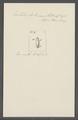 Enchelis festinans - - Print - Iconographia Zoologica - Special Collections University of Amsterdam - UBAINV0274 113 13 0015.tif