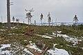 Eventyrskog hogget 13 km folkestier Øverbymarka Mjøsen skog blå rute mann.jpg
