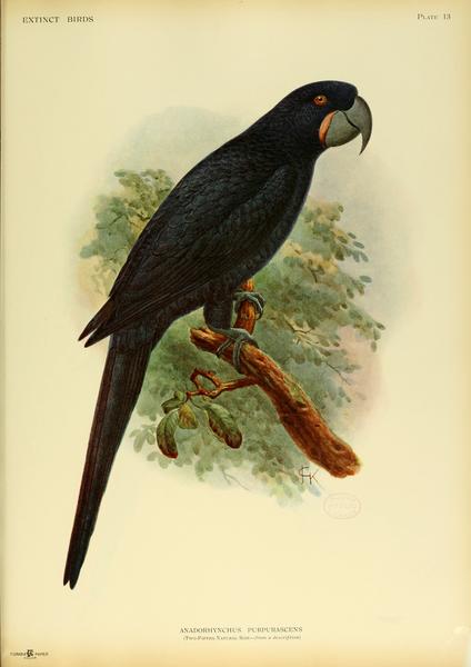 birdworlds extinct macaws