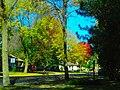 Fall Foliage in Middleton - panoramio.jpg