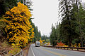 Fall arrives on the Santiam Highway (21403967474).jpg