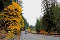 Fall arrives on the Santiam Highway (21403967474).jpg