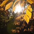 Fall light (5056318152).jpg