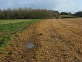 Farmland, Tilehurst - geograph.org.uk - 747403.jpg