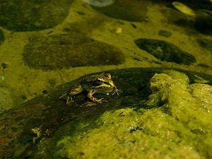 Fauna Guadalmina.JPG