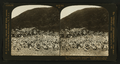 Feeding ground for twenty-five thousand pigeons; pigeon farm, Los Angeles, Cal., U.S.A, by H.C. White Co..png