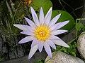 Fiore nello Stagno.jpg