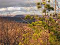 Flickr - Nicholas T - Treetops.jpg