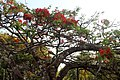 Flona Paraopeba - Flores vermelhas 02.jpg