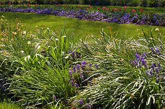 Flower garden - Flower gardens combine plants of different heights, colors, textures, and fragances to create interest and delight the senses.