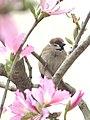 Flower Lover (13186569404).jpg