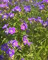 Flowers & Grass.jpg