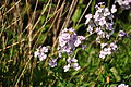 Flowers below Ten End (6991).jpg