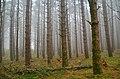 Fog in the wood.jpg