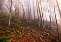 Foggy day in the forest.jpg