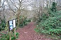 Footpath, Occombe Woods - geograph.org.uk - 1083776.jpg