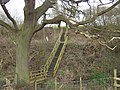 Footpath across a disused railway - geograph.org.uk - 366778.jpg