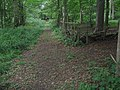 Footpath junction in the Forest - geograph.org.uk - 1427823.jpg