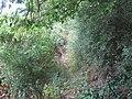 Footpath near Obeden Farm - geograph.org.uk - 1421886.jpg