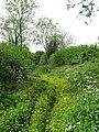 Footpath through the Buttercups - geograph.org.uk - 1318937.jpg