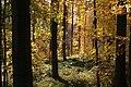 Forêt de Soignes - Waterloo.JPG