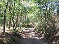 Forêt de la Coubre 012.jpg