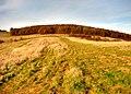 Forest, november - panoramio.jpg