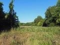 Forest 44 Meadow.JPG