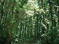 Forest ialoveni.jpg