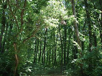 Ialoveni District - Forest in Ialoveni district