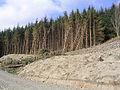 Forestry - geograph.org.uk - 392535.jpg