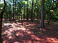 Fort Raleigh National Historic Site, Manteo, Roanoke Island, North Carolina (14437294186).jpg