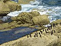 Fort la Latte cormorans.jpg