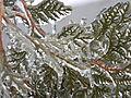 Freezing Rain in Canada 2013 9.JPG