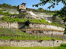 Photograph showing German vineyards on terraces. The vine has been able to conquer this northern area with a cold climate with terraced masonry vineyards; it is managed with high fences. On top of the hill, a house with a terrace overlooks the vines.