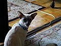 Friendly cat, 2016 09 13 -e,jpg - panoramio.jpg