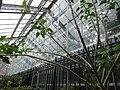Frightful Flora - US Botanic Gardens 36.jpg