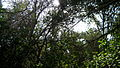 Garden Way - Wall - trees - streamlet - 17 Shahrivar st - Nishapur 10.JPG