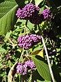 Gardenology.org-IMG 0724 hunt07mar.jpg