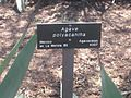 Gardenology.org-IMG 2359 hunt0903.jpg