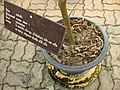 Gardenology.org-IMG 7964 qsbg11mar.jpg