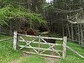 Gate and Forest, Glenhead Plantation - geograph.org.uk - 498216.jpg