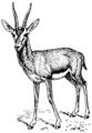 Gazelle (PSF).png