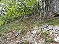 Gemeinde Naas, 8160, Austria - panoramio (1).jpg